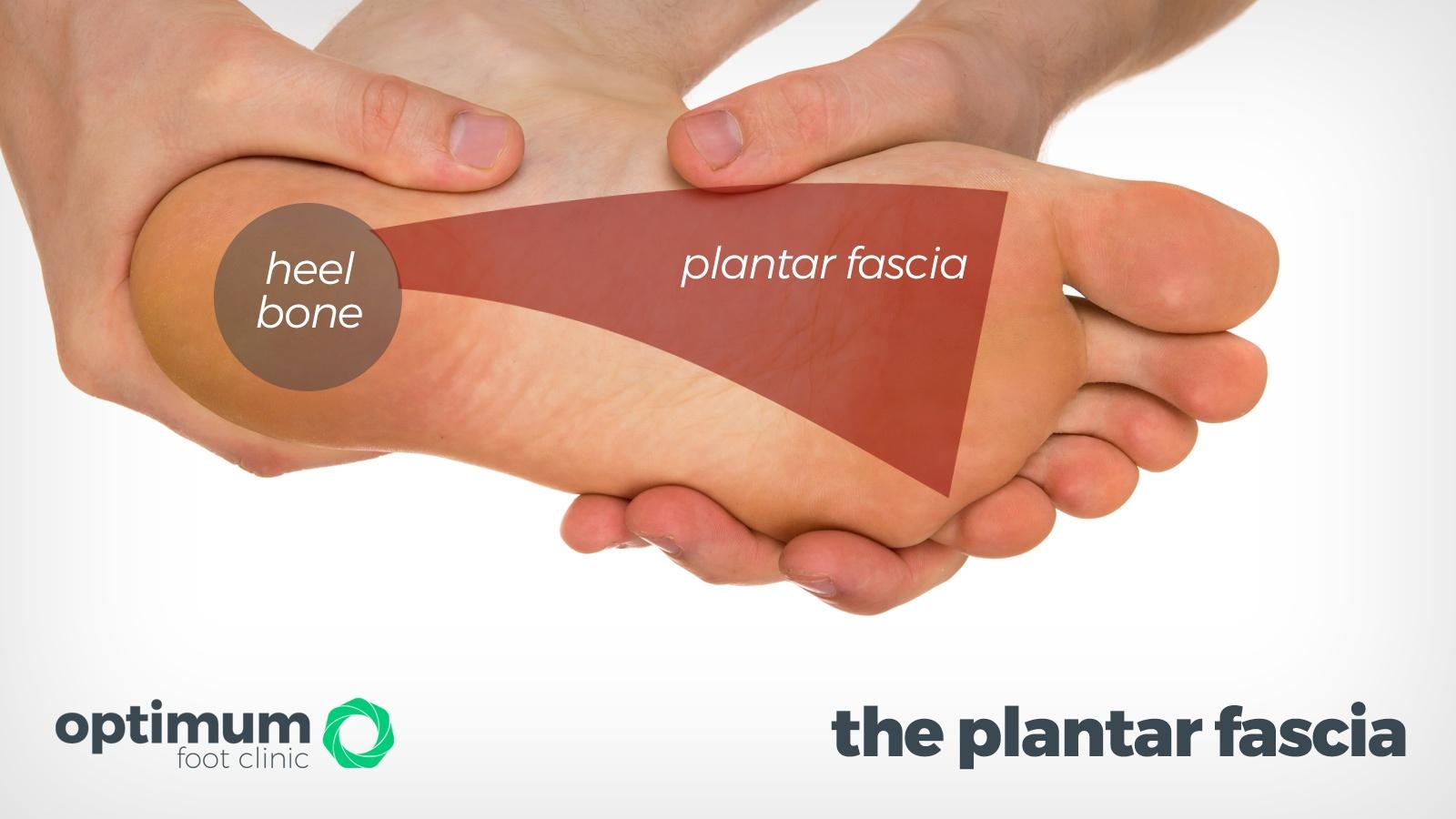 plantar-fascia-2021
